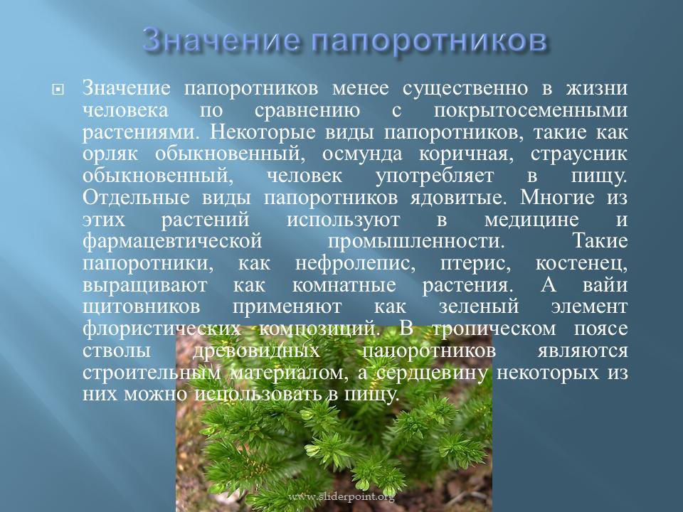 Виды папоротников — комнатные и домашние растения