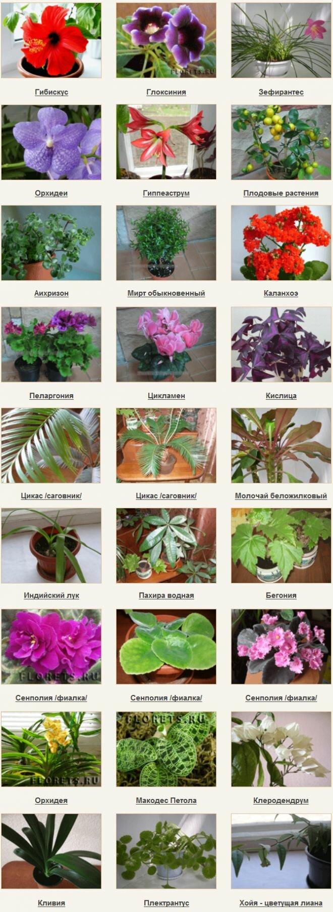 Комнатные цветы виды фото и названия все виды