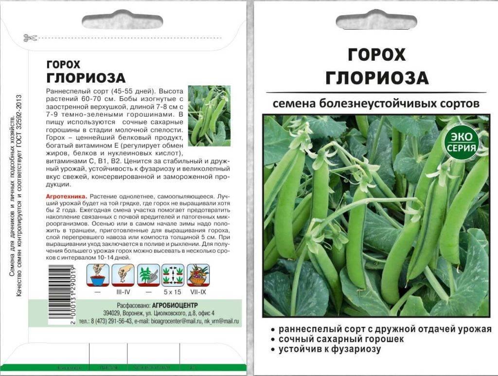 Горох Глориоза — выращивание гороха в домашних условиях