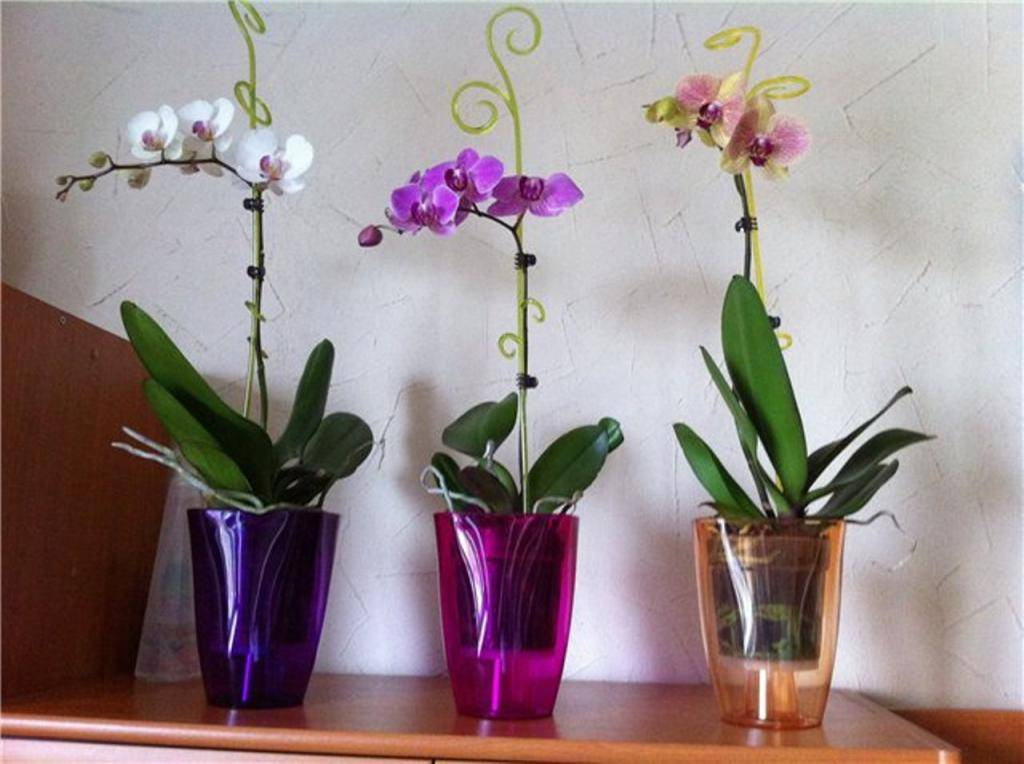 Основной вопрос: можно ли сажать орхидею в непрозрачный горшок?