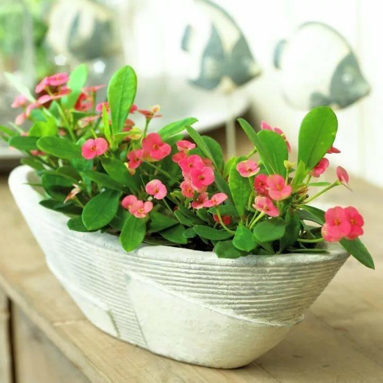 Комнатные цветущие круглый год цветы, их фото (42 шт) названия, уход