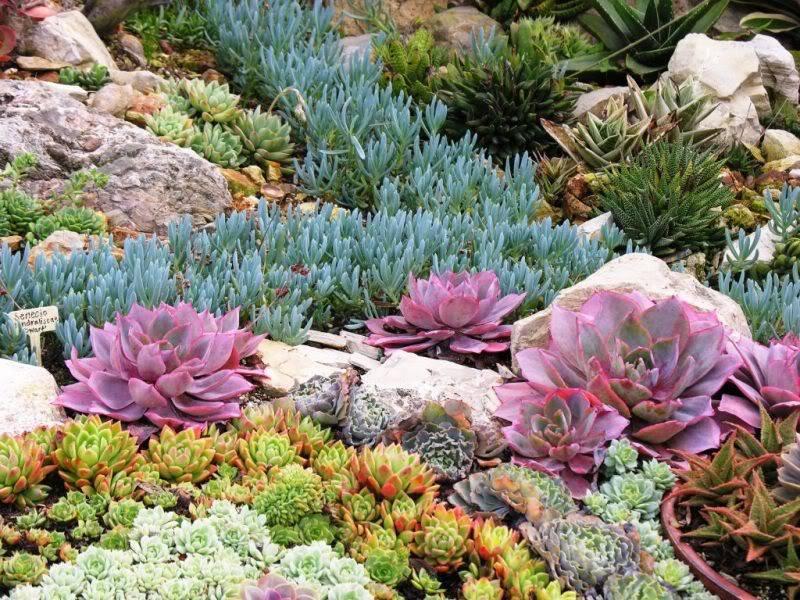 14 лучших растений для уличных кашпо