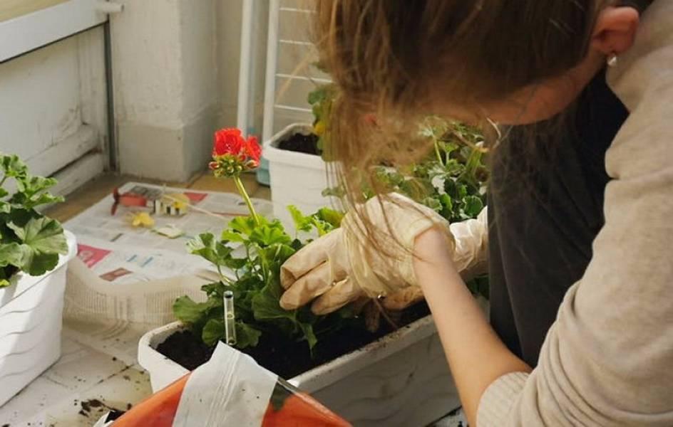 Цветок венерин башмачок — описание, правила ухода