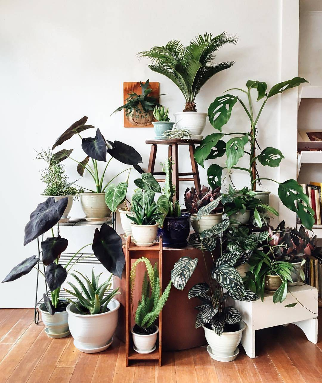 Обязательные комнатные цветы в доме и квартире