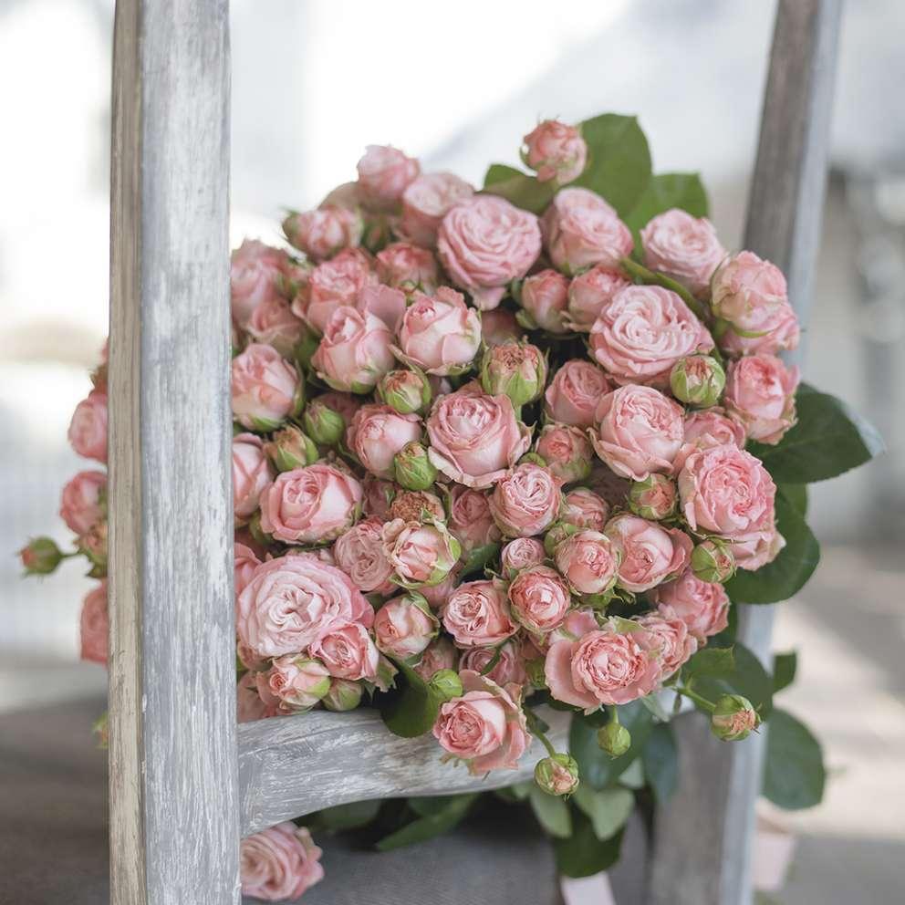 Фото и описание кустовой розы бомбастик