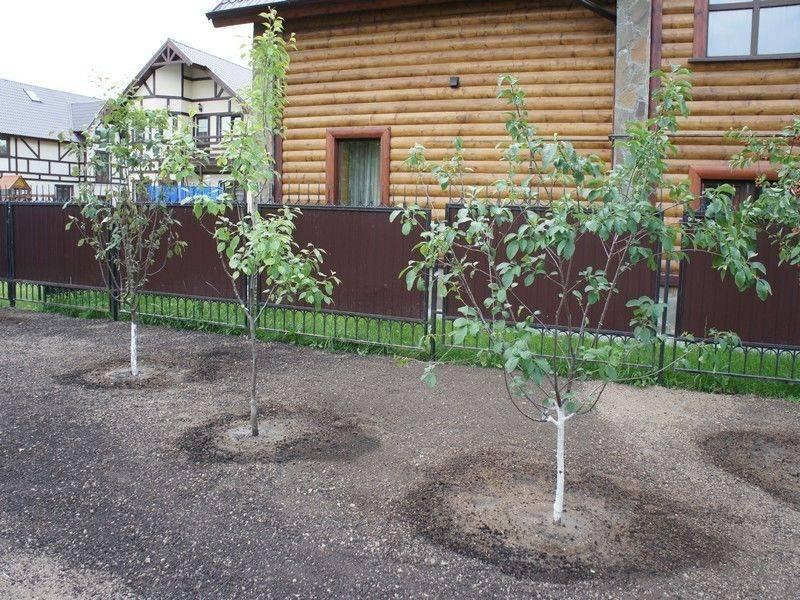 Посадка плодовых деревьев весной: 3 правила и 5 мифов