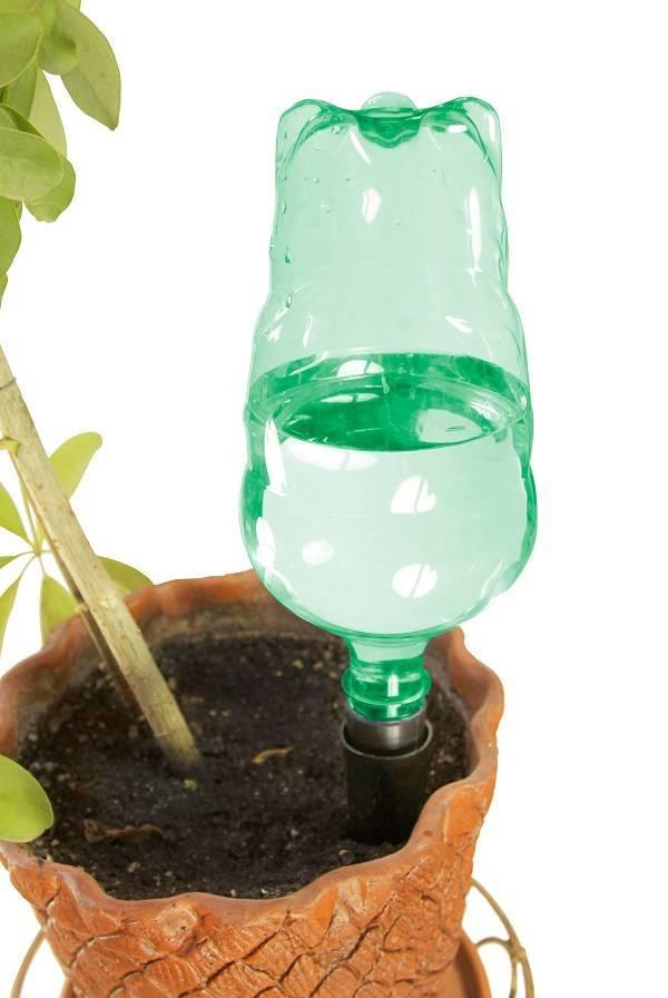Капельный полив для комнатных растений своими руками