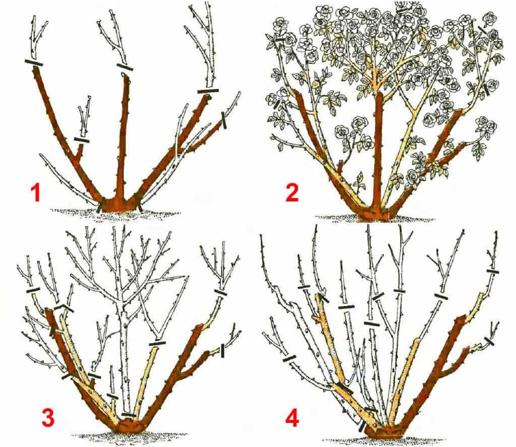 Обрезка жасмина после цветения и для формирования куста