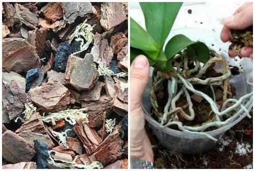 Какая кора нужна для орхидей: рекомендации по выбору и обработке