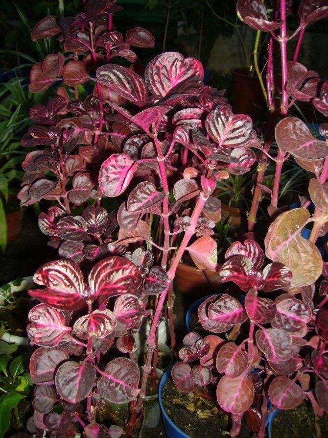 Как правильно ухаживать за цветами в домашних условиях