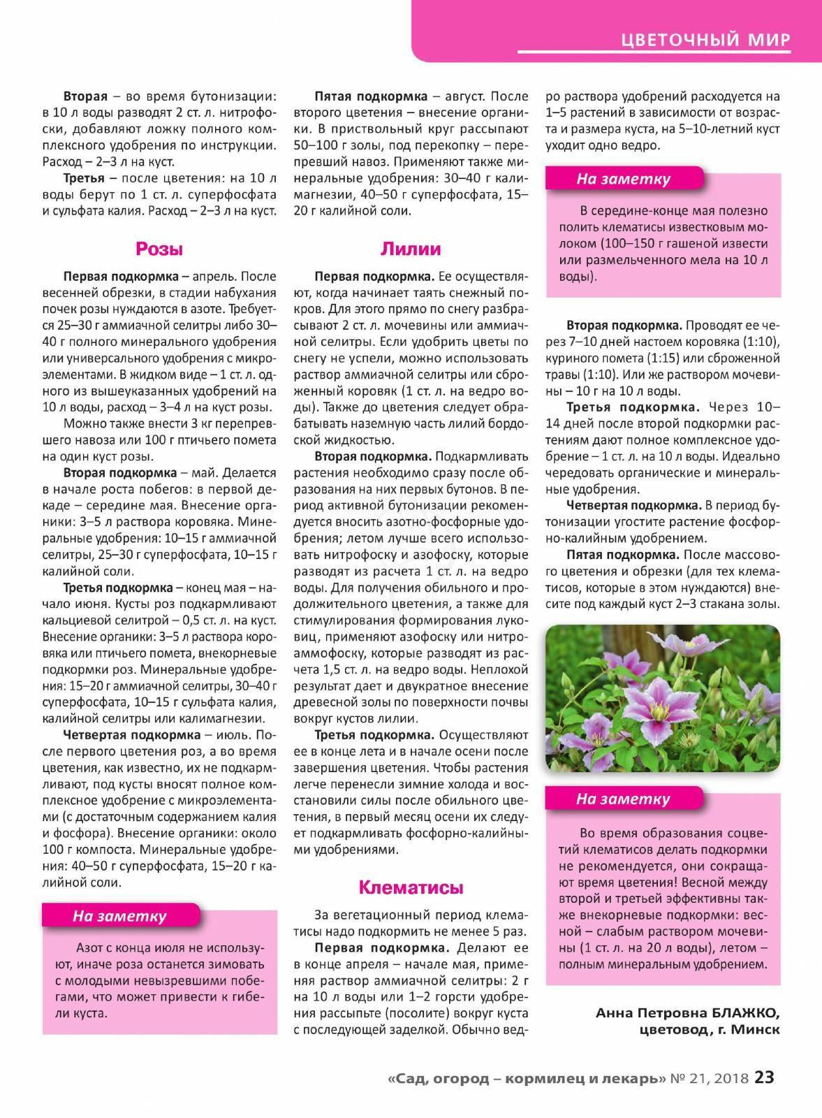 Чем удобрять розы при посадке, летом и весной: органические и минеральные удобрения