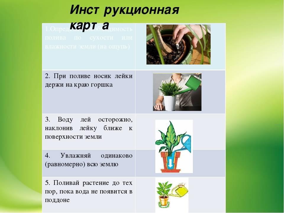 Как часто нужно поливать комнатные цветы – график на весь год
