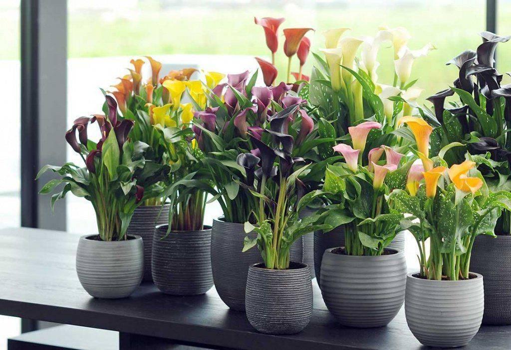 Какие комнатные растения обязательно должны быть в доме?
