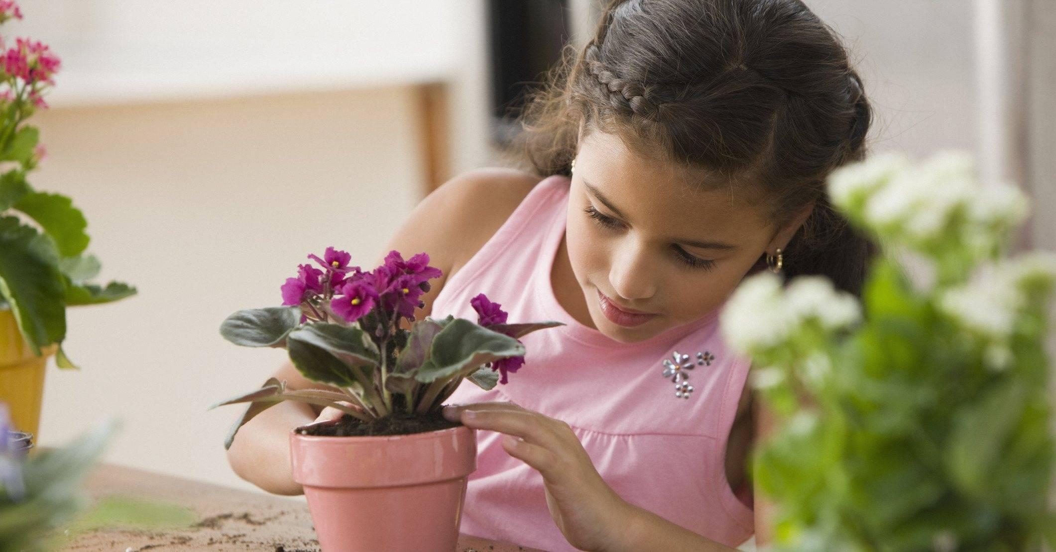 Узнайте поверья про фиалки, можно ли эти цветы держать дома, приметы и их толкование
