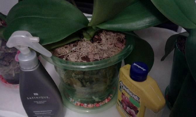 Условия содержания орхидеи, кратко о влажности воздуха, освещении и поливе: как правильно ухаживать за домашним растением, какие встречаются при этом ошибки?