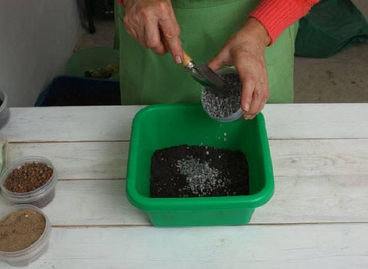 Как поливать «долларовое дерево»? полив замиокулькаса зимой. как часто и чем надо орошать замиокулькас для роста в домашних условиях?