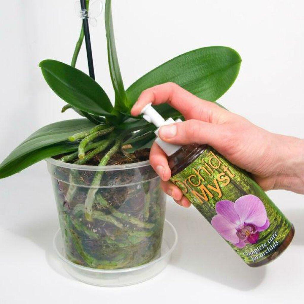 Интересные факты о том, чем обработать орхидею от вредителей