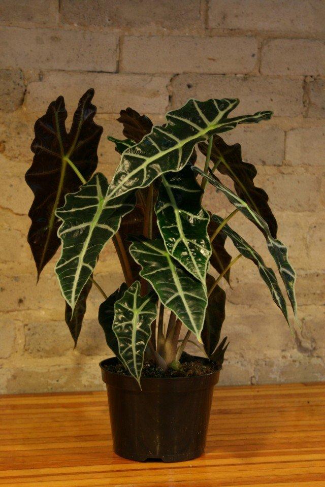 Самые теневыносливые домашние растения: список, фото иописание