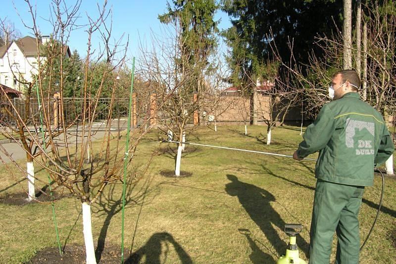 Обработка плодовых деревьев в саду весной