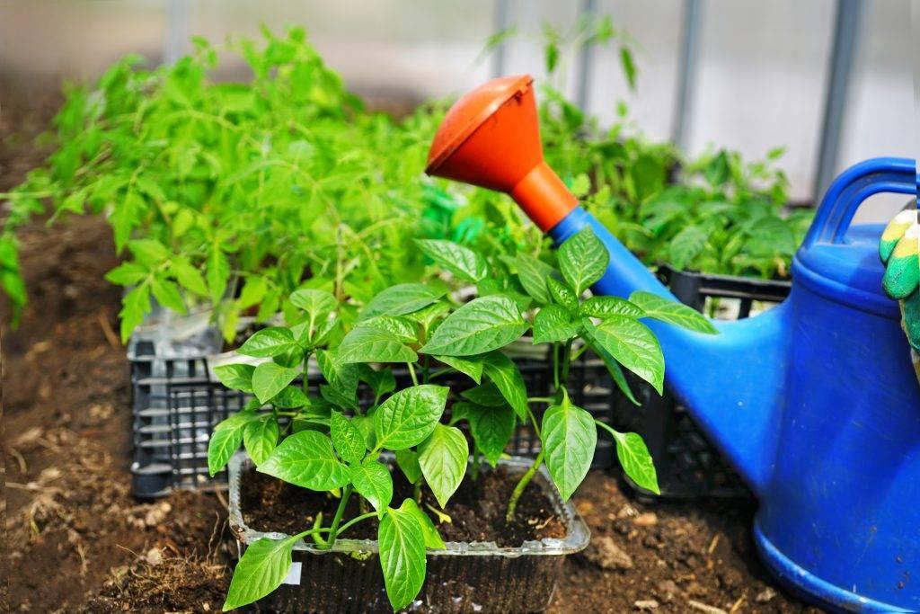 Выбираем суккуленты для посадки в грунт на садовом участке