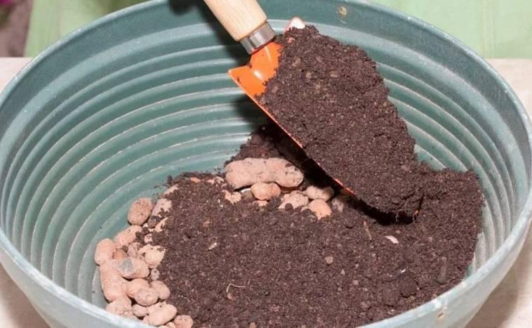 Особенности выращивания пентаса в открытом грунте, правила ухода, применение в дизайне ландшафта