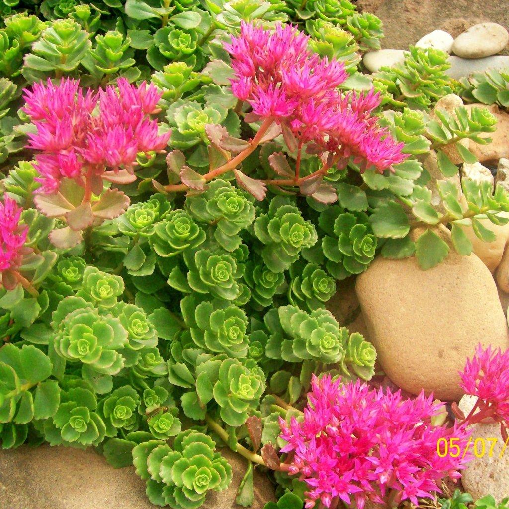 Самые популярные комнатные цветы
