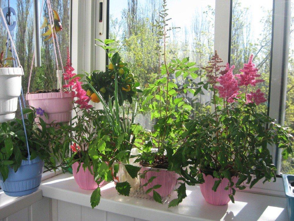 Пионы: особенности выращивания и уход