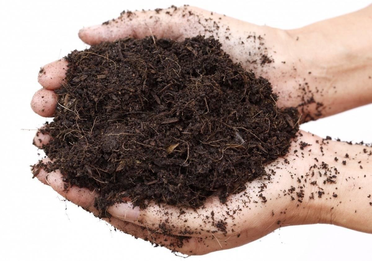 Грунт для антуриума: какой нужен состав готовой почвы для его пересадки? как в домашних условиях сделать субстрат своими руками?