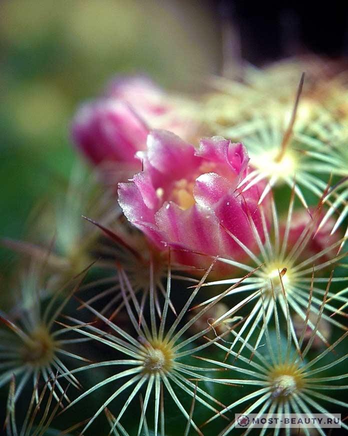 Особенности ухода за кактусами весной и летом