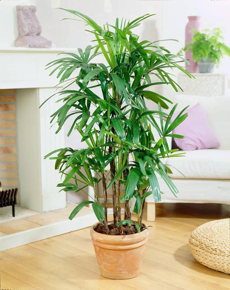 Каталог комнатных растений с фотографиями и названиями