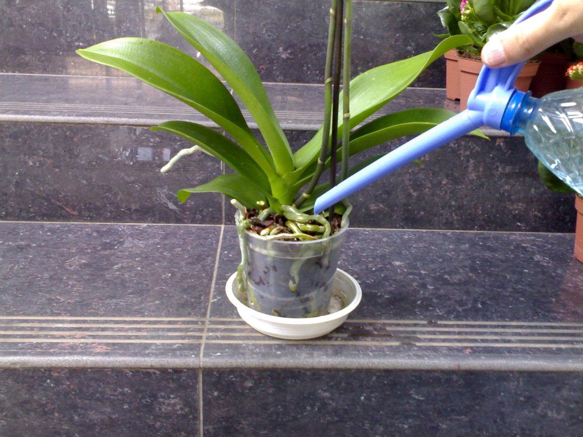 Выращивания орхидей в домашних условиях. советы начинающим цветоводам.
