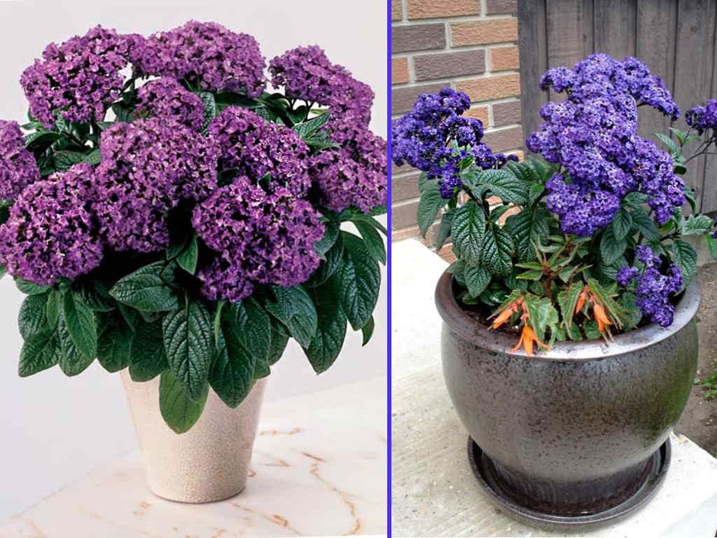 Самые неприхотливые комнатные растения: зеленые аскеты для начинающих цветоводов