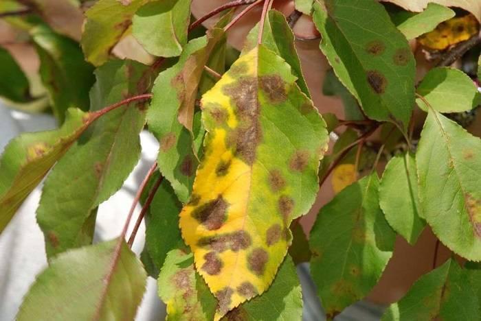 Лечебные свойства и применение корня барбариса в народной медицине