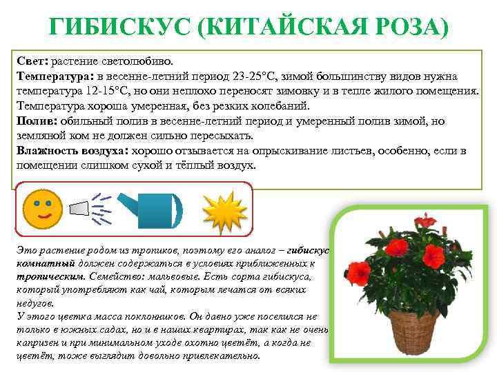 уход за комнатными розами в картинках значок активируйте