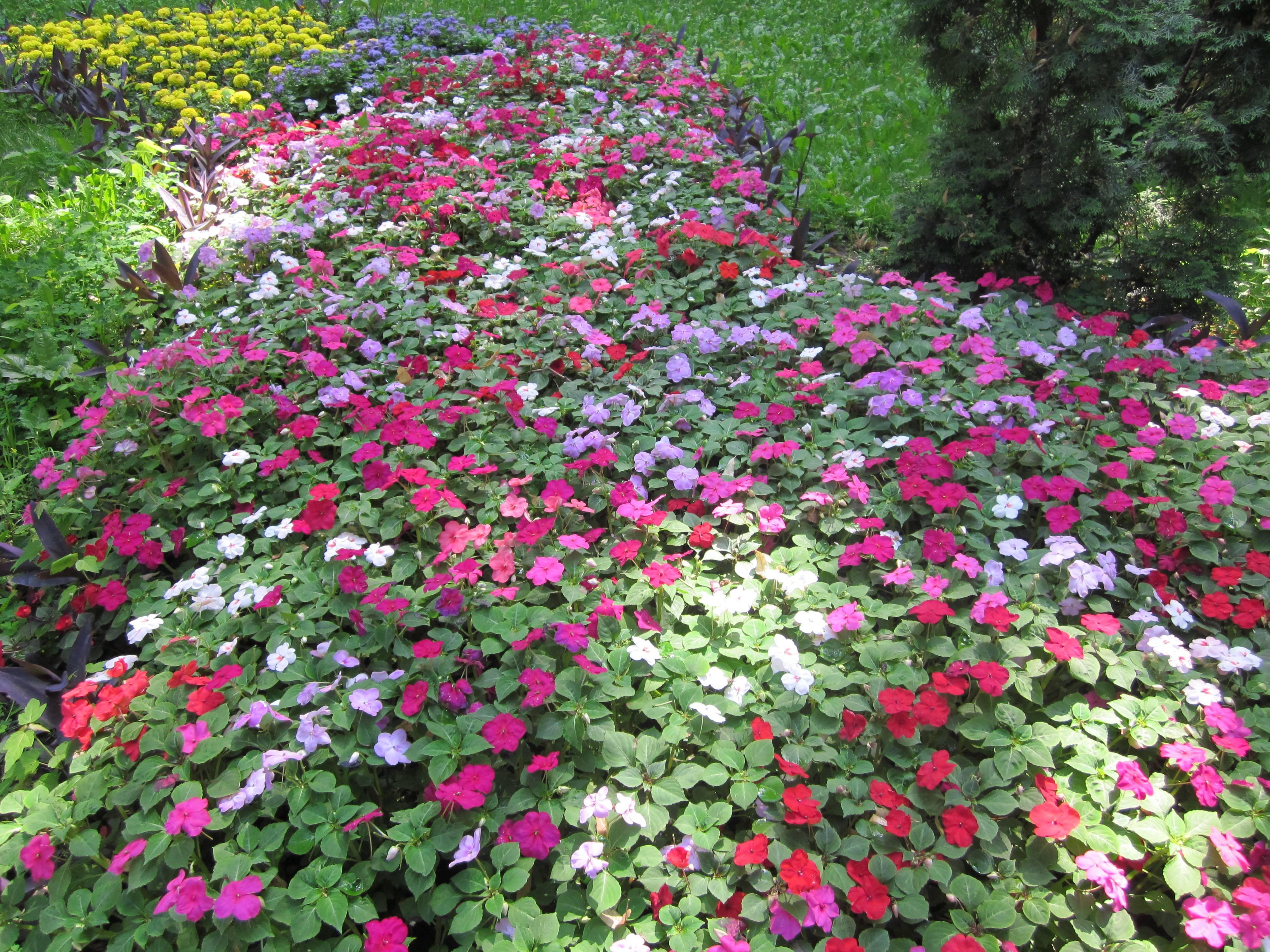 Вечнозеленый сад. миксбордер в саду. хвойные и лиственные кустарники. посадочный материал