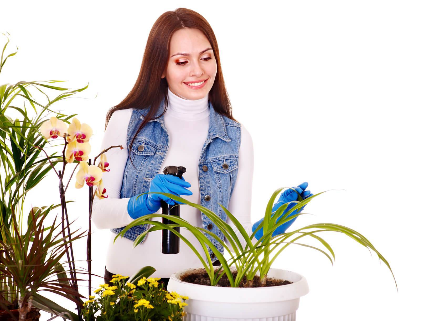 Бромелиевые: выращивание, уход, размножение