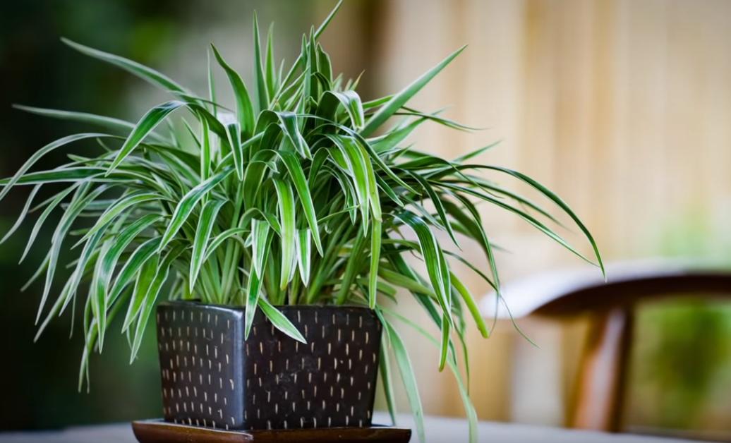 15 комнатных растений, улучшающих воздух в квартире