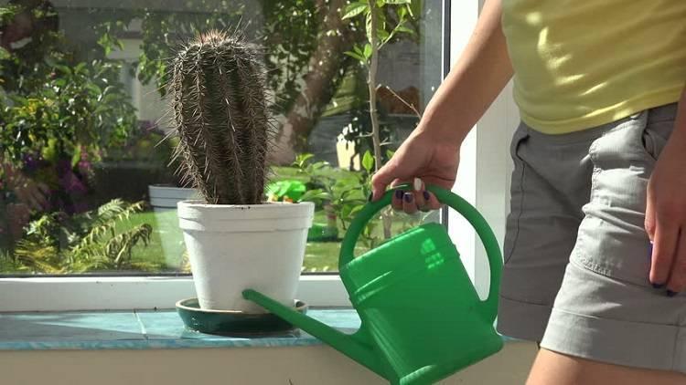 Опунция, выращиваем кактус в домашнем саду