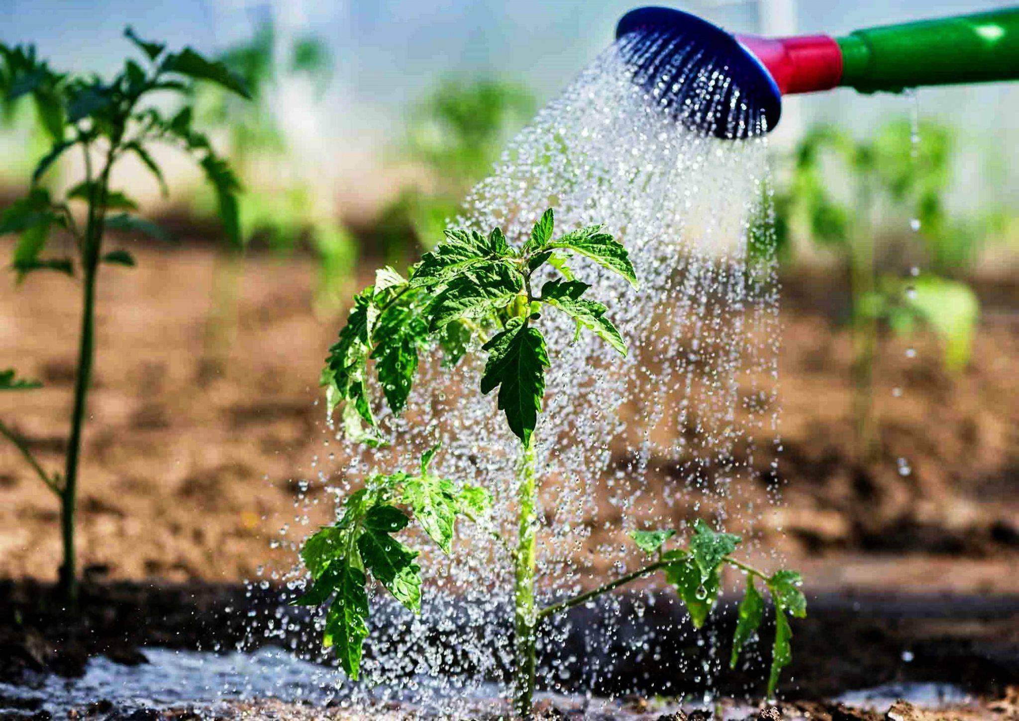 Как правильно поливать огород?