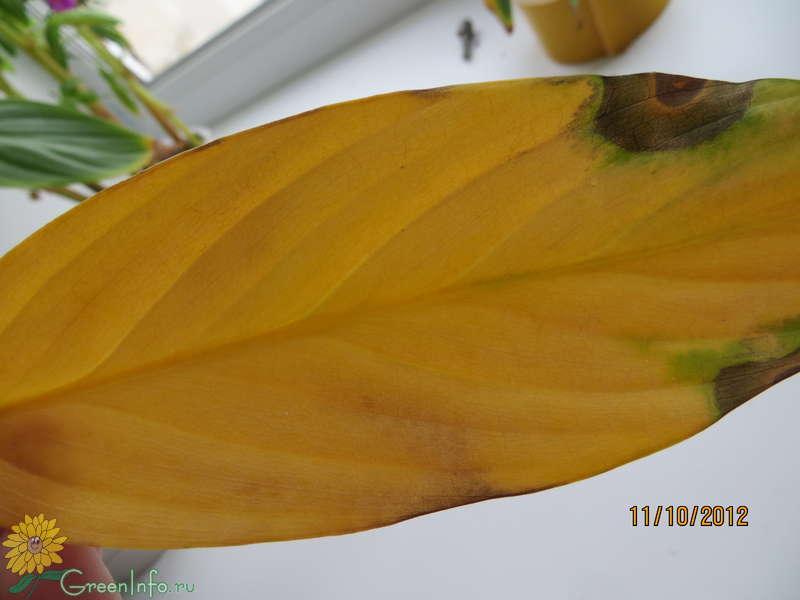 Почему желтеют листья у комнатных цветов — что делать