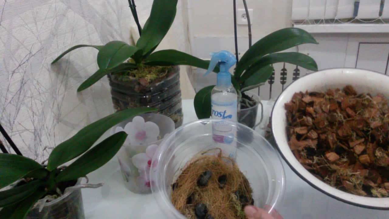 Необходимый состав грунта для орхидей и примеры субстрата своими руками