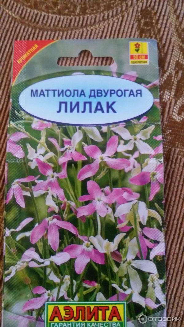 Маттиола ночная фиалка — цветок с чудным запахом