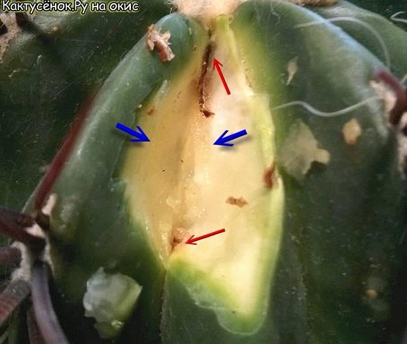 Чем болеют плодовые деревья: лечение фруктовых деревьев, почему трескается кора