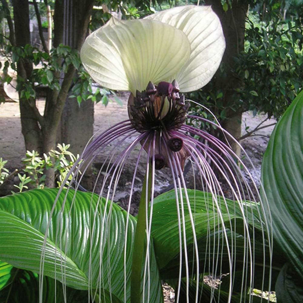Большие комнатные растения (32 фото): высокие домашние цветы и крупные растения типа дерева в горшках для дома