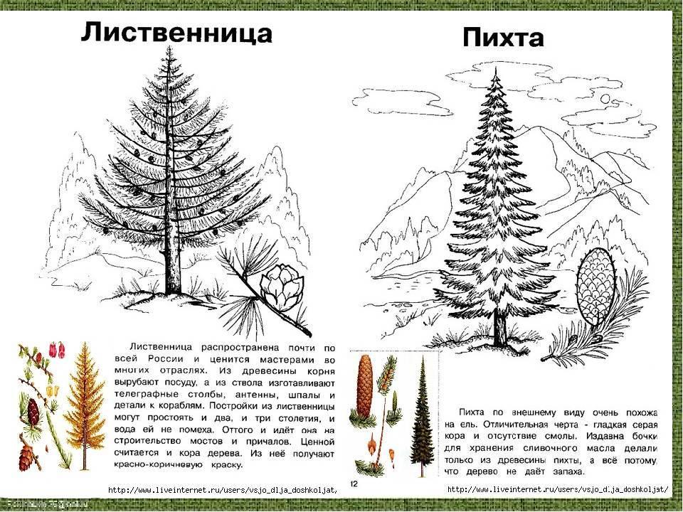 О том как выращивать герберу садовую: посадка и уход на улице, в саду, на даче
