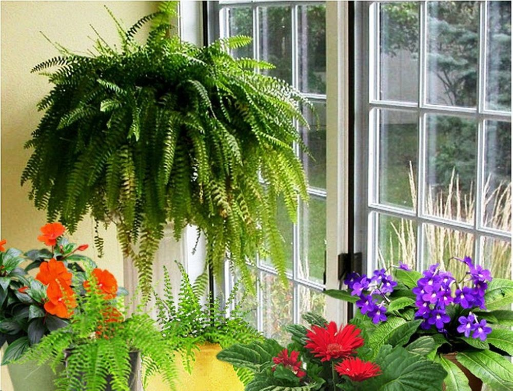 Напольные цветы для дома