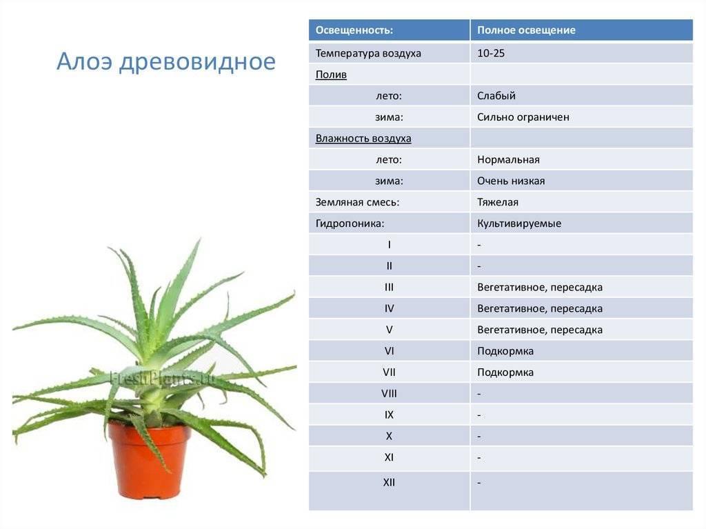 Уход и выращивание цветка – неомарика
