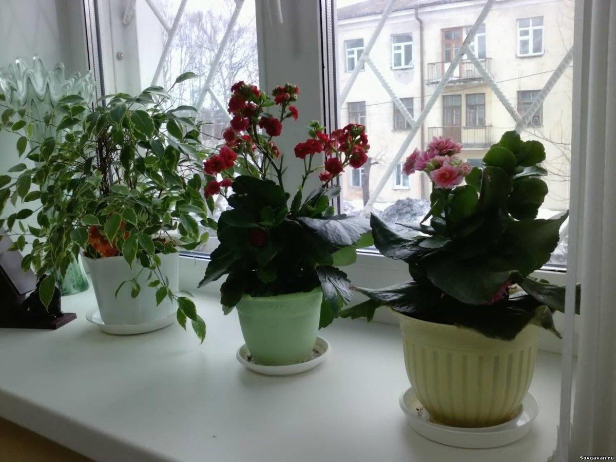 10 комнатных растений, не требующих особого ухода