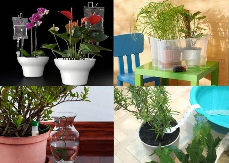 Как сохранить цветы на время отпуска без полива