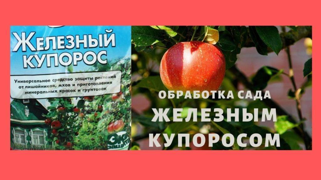 Гортензия вимс ред — описание метельчатой садовой гортензии - pocvetam.ru